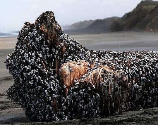 【閲覧注意】ニュージーランドの砂浜に謎の生命体が打ち上がる