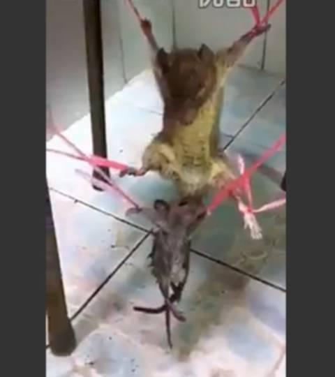 ネズミ 虐待